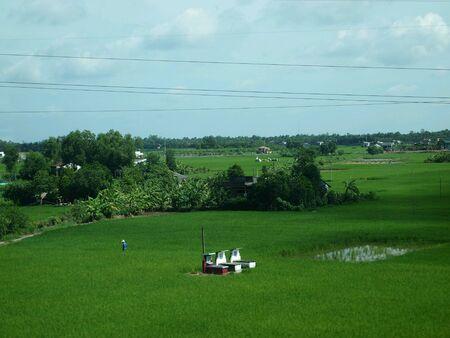 paddy field: Paddy field in Vietnam Stock Photo