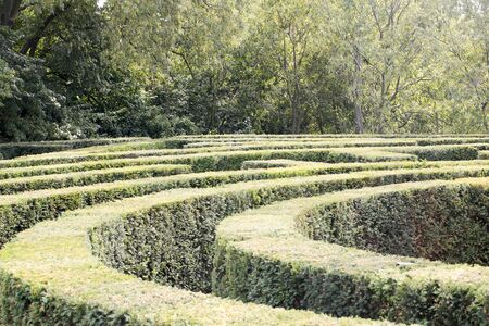 garden labyrinth of vegetation made of boxwood plants seen from above