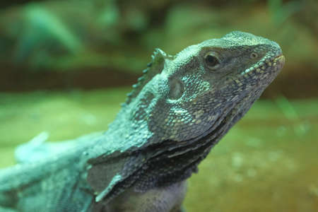 A close up of a lizard. High quality photo