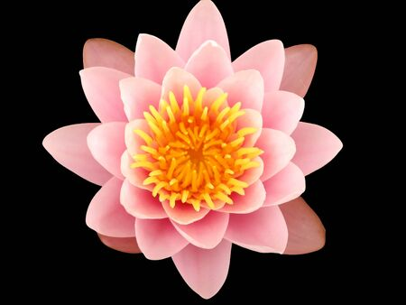 A Pinky lotus flower in a pond