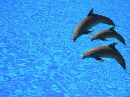 three dolphins jumping in the air above blue waters - isolated Stock Photo