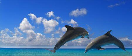 dos delfines saltando en el aire por encima de las aguas azules  Foto de archivo