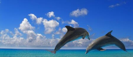 two dolphins jumping in the air above blue waters  Stock Photo