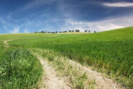 A dirt road on a hill of green grass with a perfect blue sky with some clouds