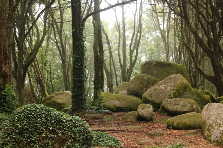 Green forest trees with rocks photo