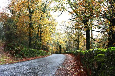 Road with green and gold forest trees in autumn Stock Photo - 9829722
