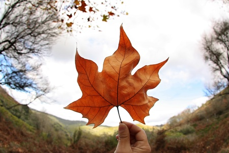 Brown leaf holded against the sky Stock Photo - 12774380