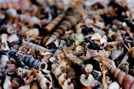close up shells Stock Photo
