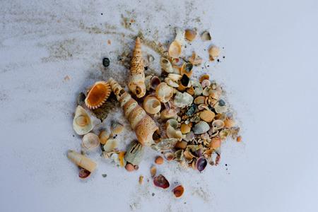 shells on white background Stock Photo
