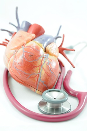 human organs and stethoscope  photo