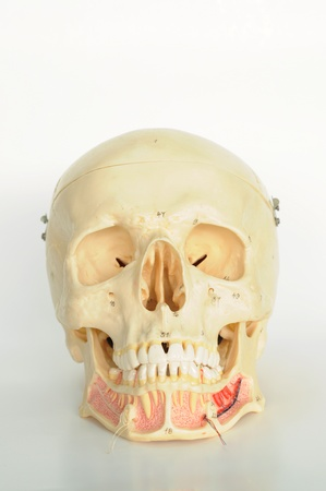 close up to human skull  photo