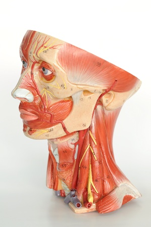 face close up: close up to face human model  Stock Photo