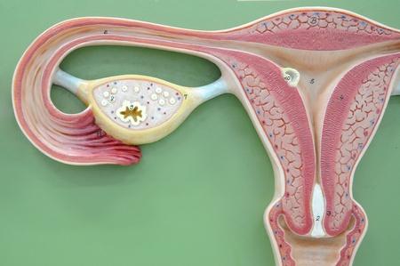ovary: el �tero de los derechos humanos