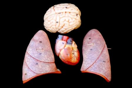 metastasis: part of human