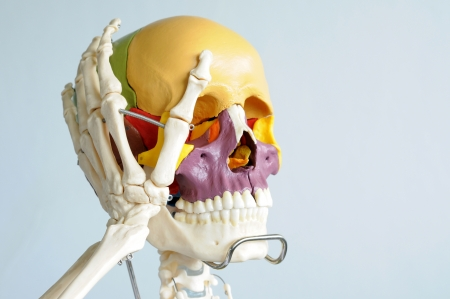 skull and hand bone Stock Photo - 13931045