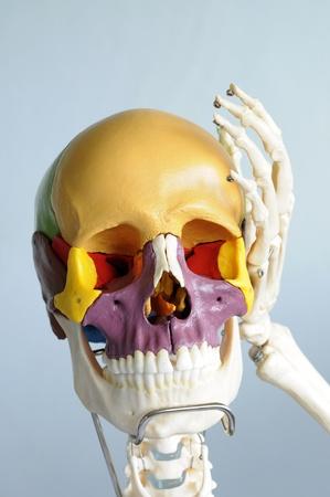 skull and hand bone Stock Photo - 13931049