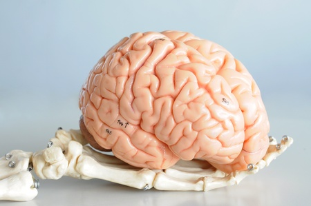 brain and hand Stock Photo