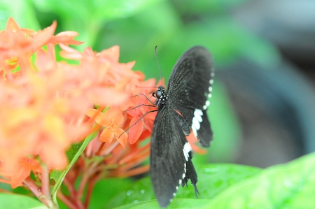 butterfly in the garden photo