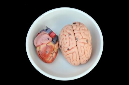 Human organs Stock Photo - 17460866