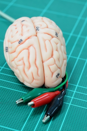 human brain Stock Photo - 17765684