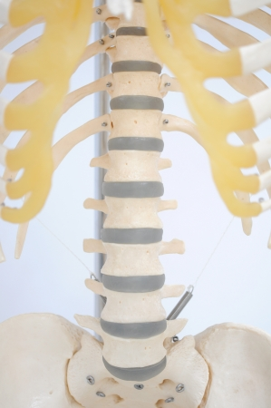 rib cage: anatomy of rib Stock Photo