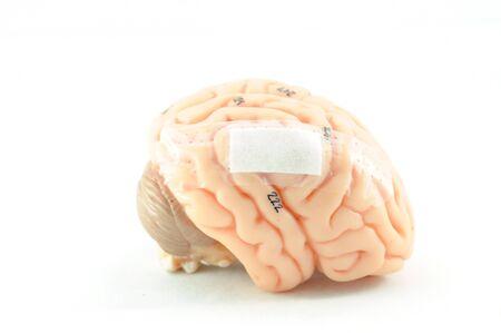 cerebra: pain of human brain