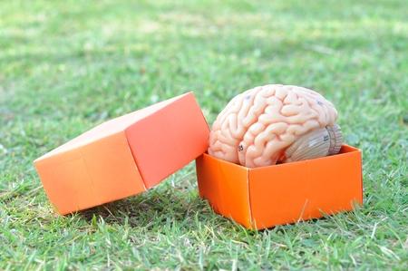 brain and box