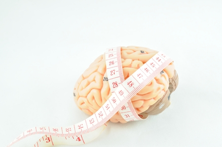 pons: brain and  tape measure