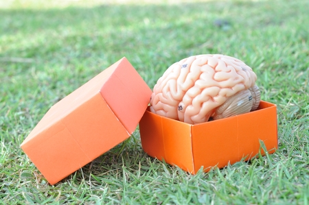 brain and box
