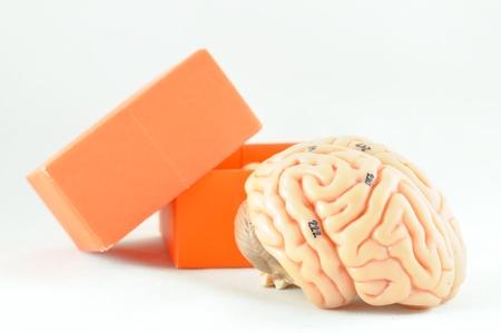 hypothalamus: brain and box