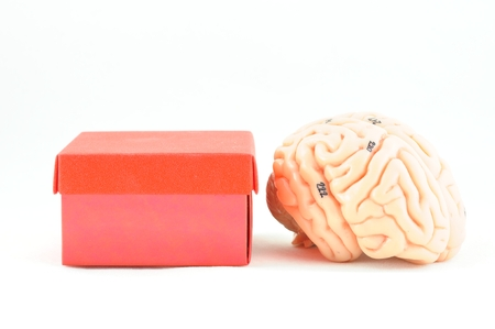 pons: brain, thinking out of box