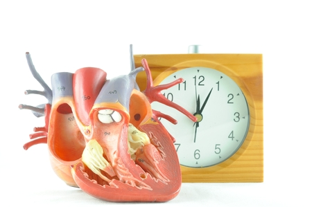 human heart Stock Photo - 36248828