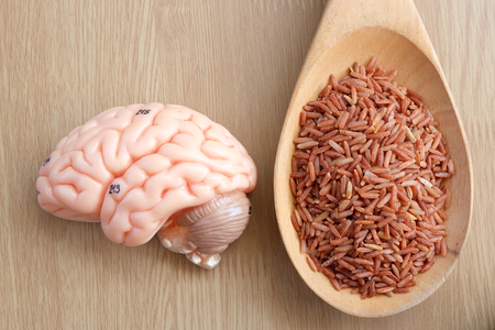 thalamus: brain and red rice on wooden background with healthy concept