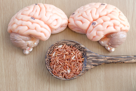 medulla: brain and red rice on wooden background with healthy concept