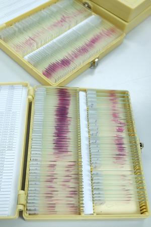 histology: histology slide for laboratory
