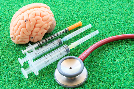 medulla: human brain model on green grass background