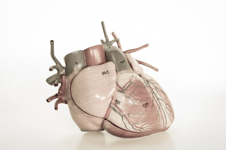 with aorta: human heart with vintage style