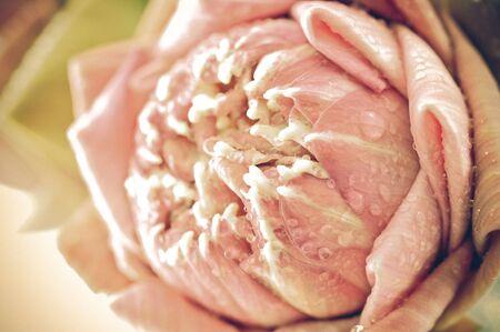 lotus flowers: beautiful lotus with vintage style