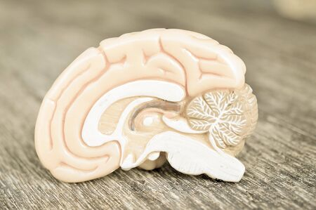 killings: human brain with old style Stock Photo