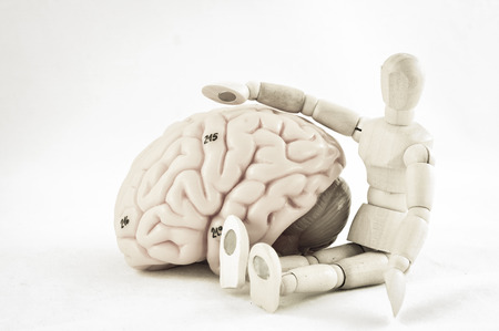 oblongata: human brain with old color style
