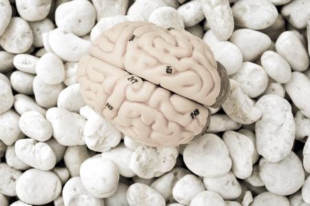 oblongata: human brain with vintage style