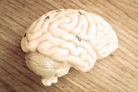 brain function: human brain with vintage style