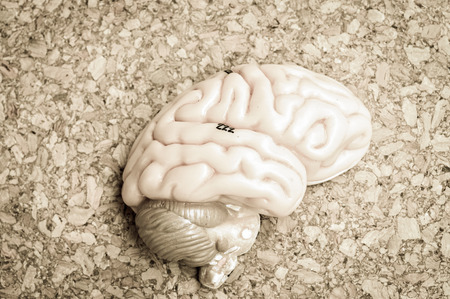 systems thinking: human brain with vintage style