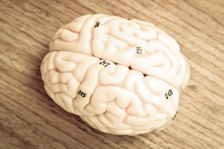 medulla: human brain with vintage style