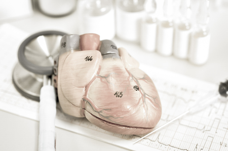 with aorta: human heart model with old color style