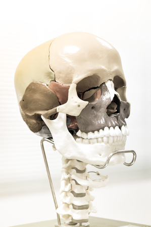 human skull with vintage color concept