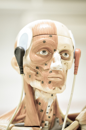 neuromuscular: electromyography model with old color style
