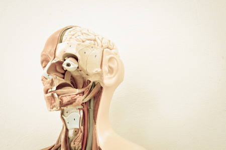 body human: human anatomy model with old color style