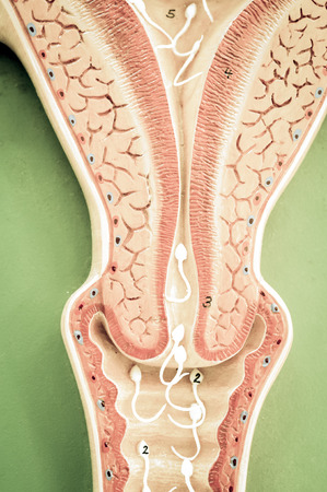 semen: uterus of human with old color style