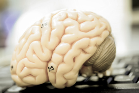 brain stem: human brain model with old color style Stock Photo